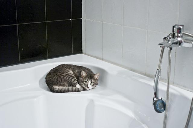cat-1052060_640.jpg