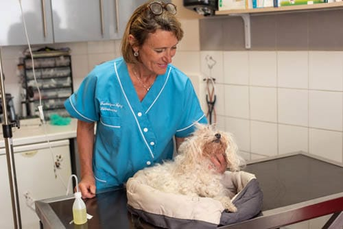 Clinique Vétérinaire des Orangers - Le Cannet-Consultation
