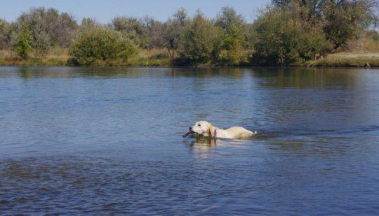 Vignette-chien-baignade-1200x686-540x3091.jpg