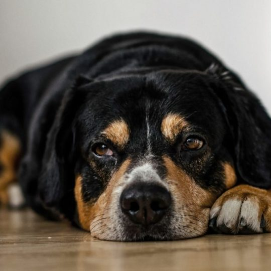 dogs-958216_1920-e1512663939159-1200x684-540x5401.jpg