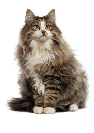 Clinique vétérinaire des Orangers. Plans de prévention chats