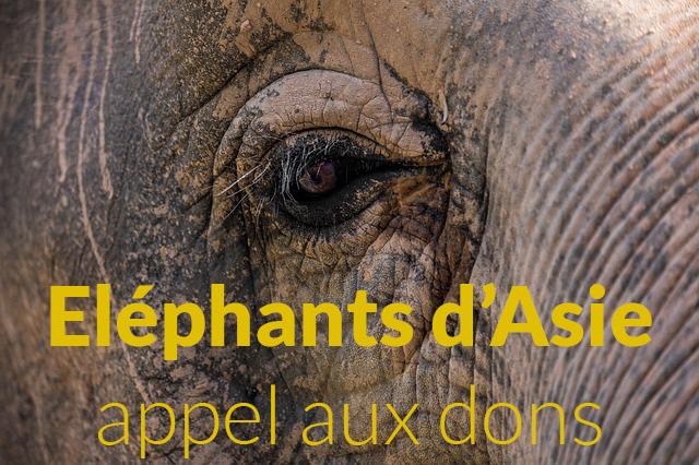 elephant-3264041_640.jpg