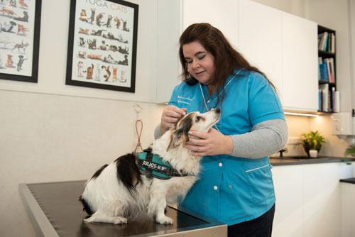 veterinaire Le Cannet soins